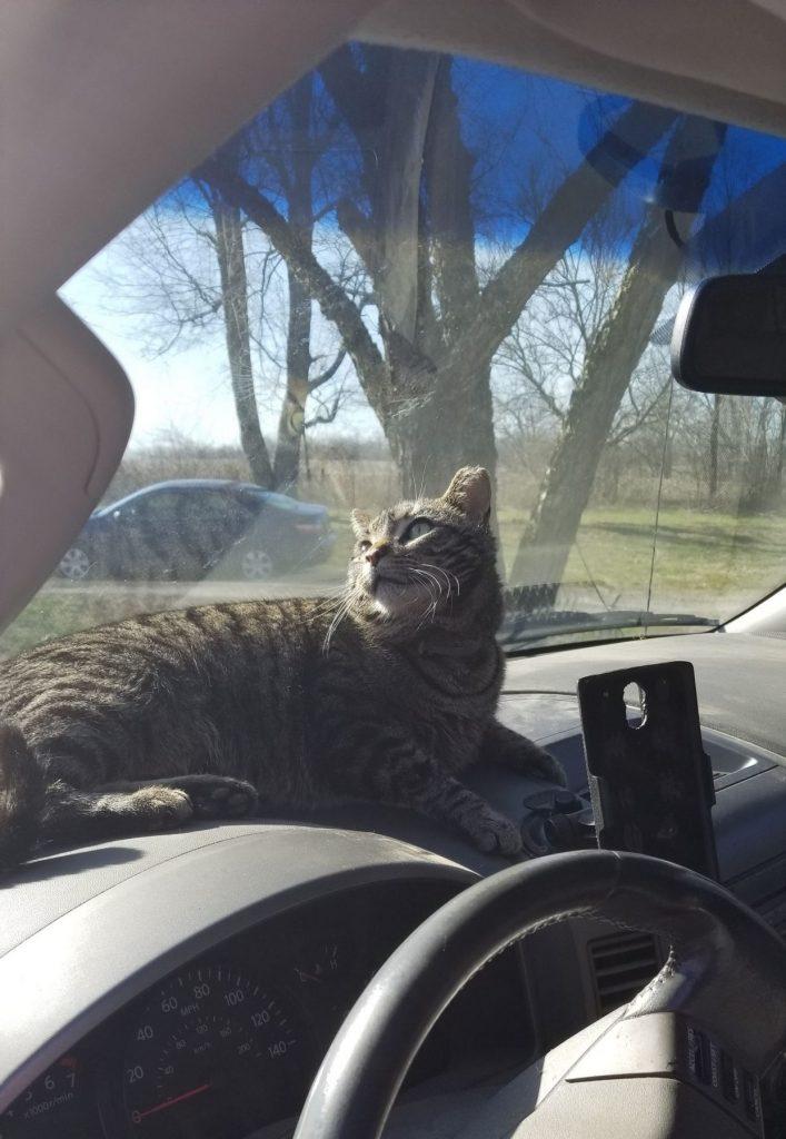 Ninja the kitty on duty